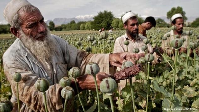 afganistan-in-uyusturucu-ekimi-bu-yil-rekor-kirdi-5307013_1880_o.jpg